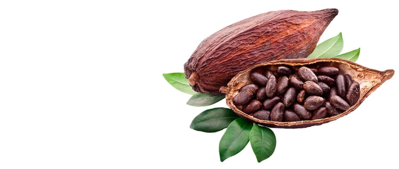 Cacao-calidad